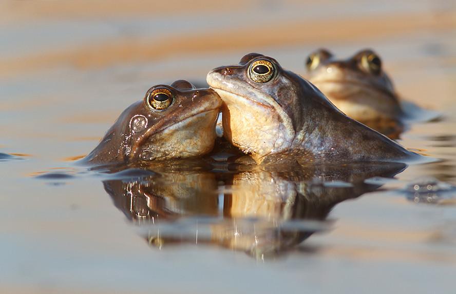 Лягушки. Фото: Tom Kruissink