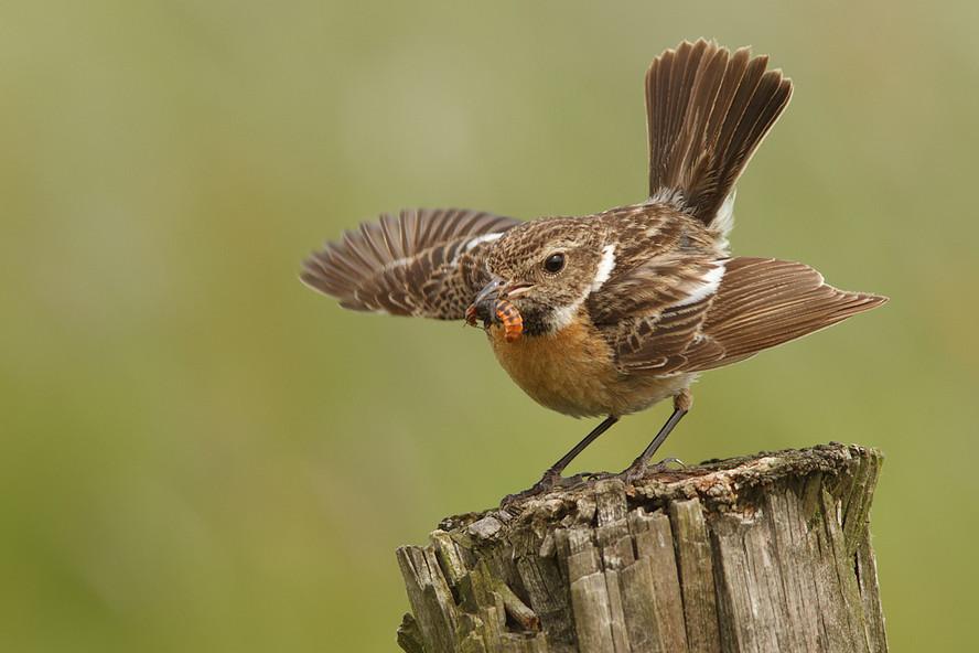 Фото птиц.  Tom Kruissink