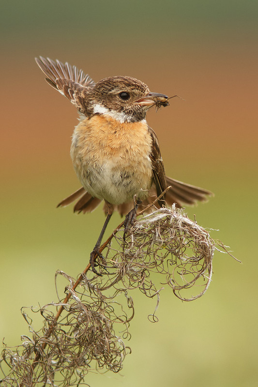 Птицы поймала паучка.  Фото: Tom Kruissink