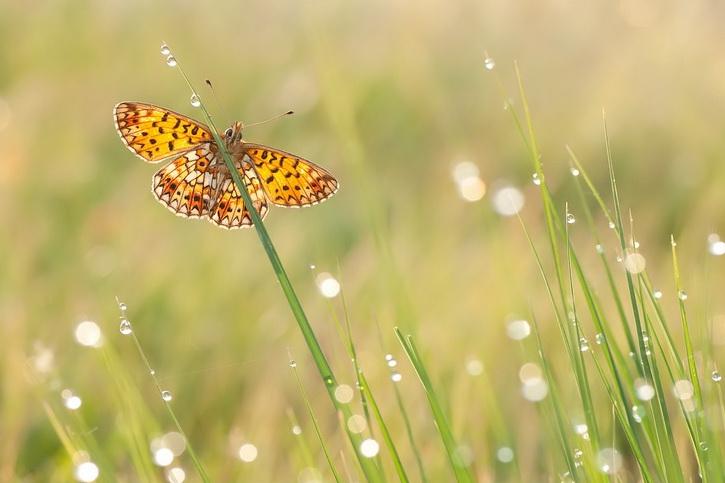 Бабочка. Фото: Tom Kruissink