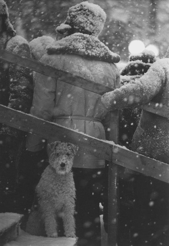 «Не мое собачье дело». 1965 год. Фото: Владимир Богданов