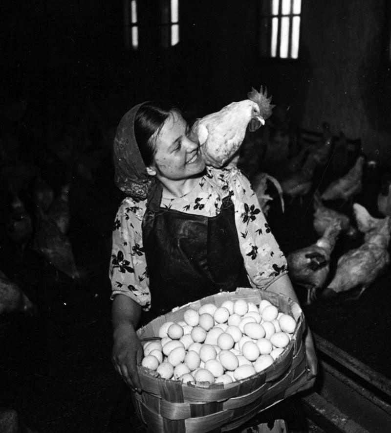 Птичница. г. Кировск. Заполярье. 1950 год. Фото: Яков Рюмкин