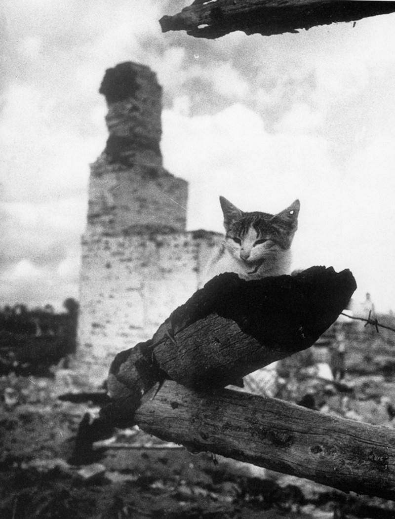 На пепелище. г. Жиздра. Кошка с простреленным ухом. 1943 год. Фото: Михаил Савин
