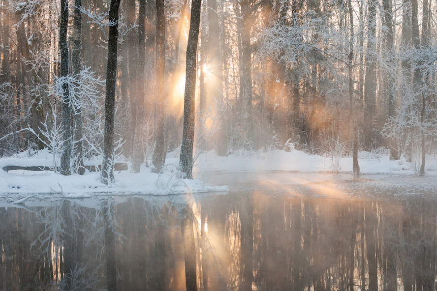 Утро, туман, лес. Фото: Janek Laanemae