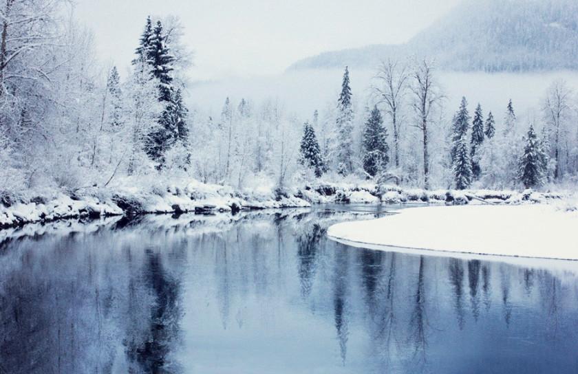 Заснеженный лес. Фото: Sarah Cederholm