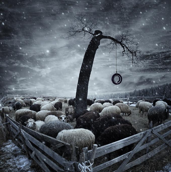 Овцы. Фото: Карас Йонут