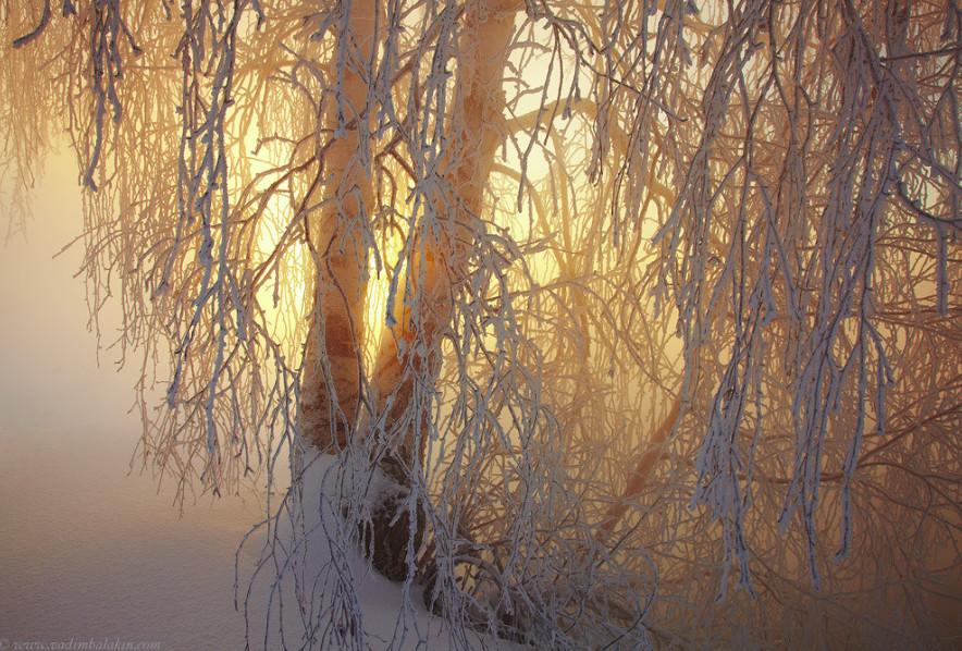 Дерево в инее. Фото: Vadim Balakin