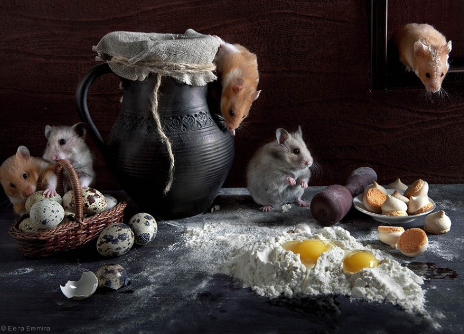 Фото: Elena Eremina