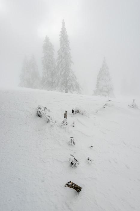 Туман и белый лес. Фото: Zsolt Kiss