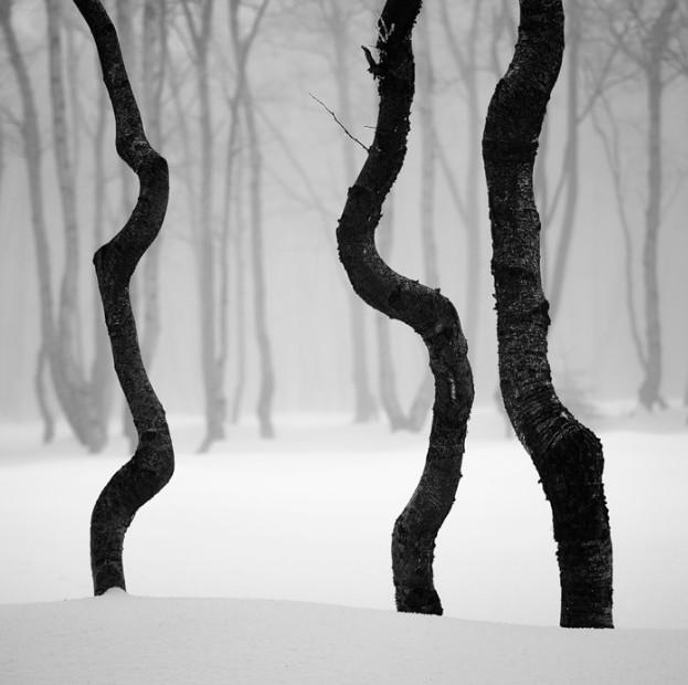 Фото: Martin Rak