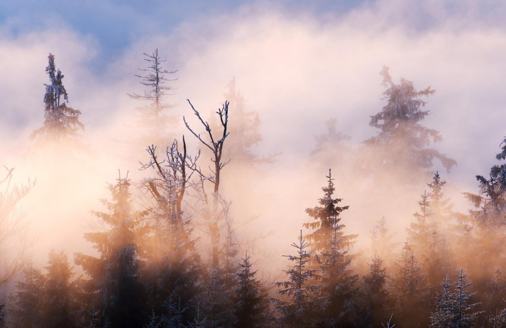 Розовый туман. Фото: Philip Klinger