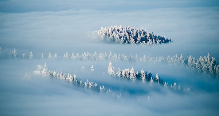 Зимний лес в тумане. Фото: Marcin Jagiellicz