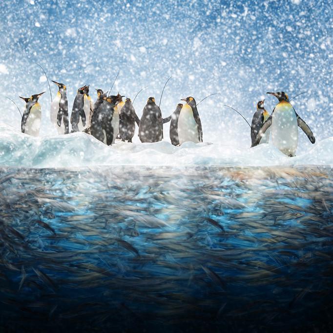 Пингвины и снег. Фото: Карас Йонут