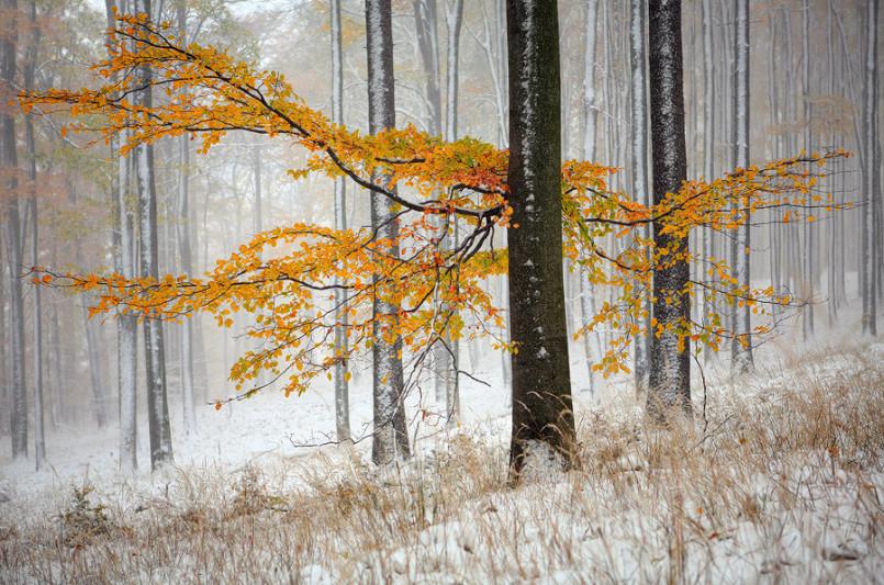 Зимний лес. Фото: Michal Vitasek