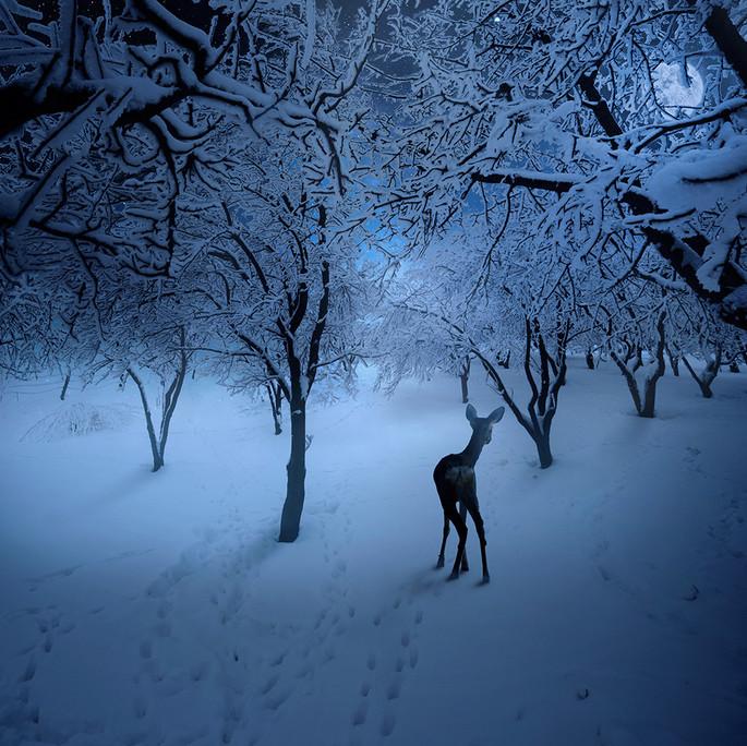 Зимний лес. Фото: Карас Йонут