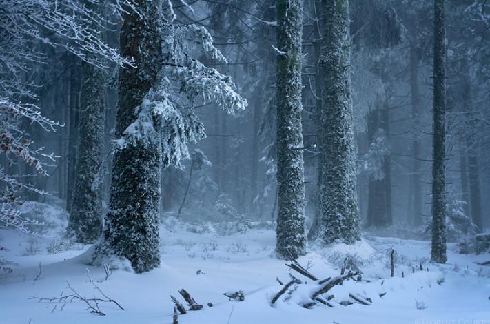 Зимний сумеречный лес. Фото: Florent Courty