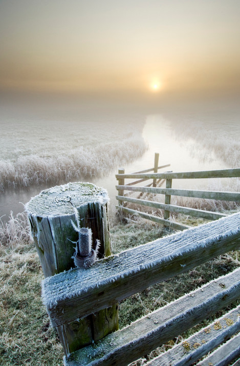 Зимний туман и иней. Фото: Robert Canis