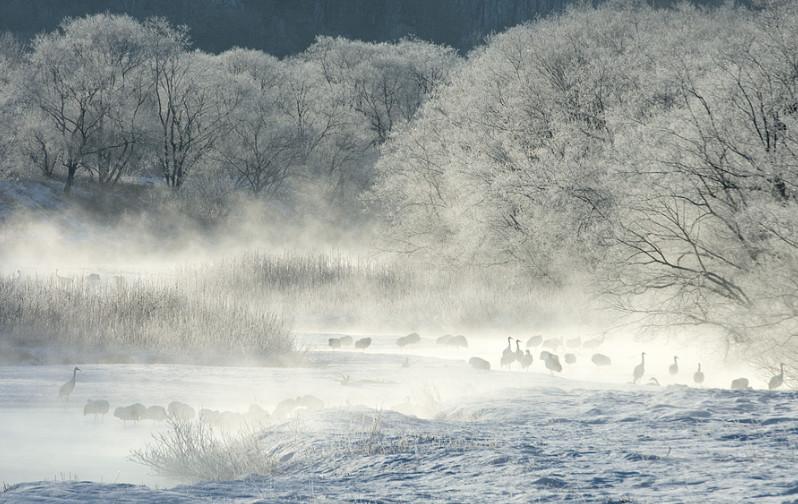 Туман зимой над озером. Фото: Marsel van Oosten
