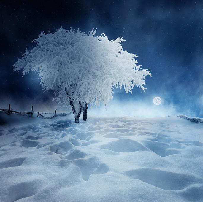 Заснеженное дерево. Фото: Карас Йонут