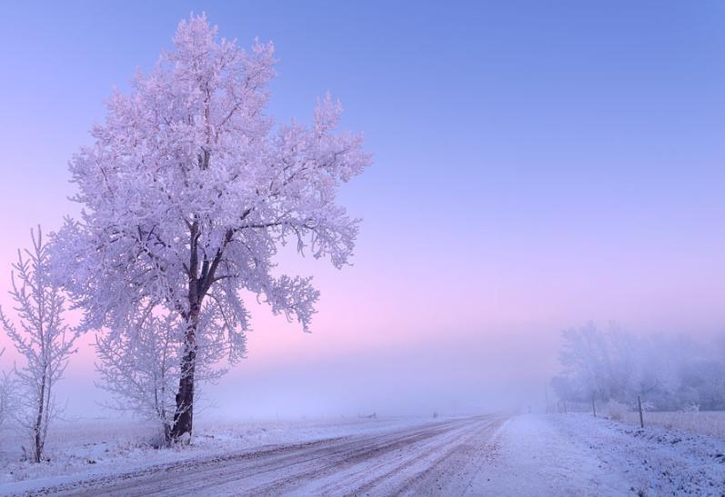 Туманное зимнее утро. Фото: Dan Jurak