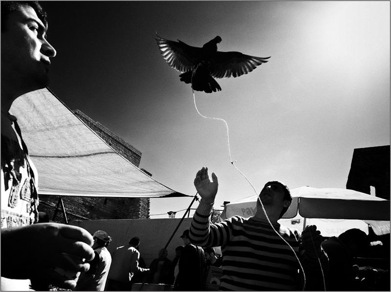 Птичий рынок в Стамбуле