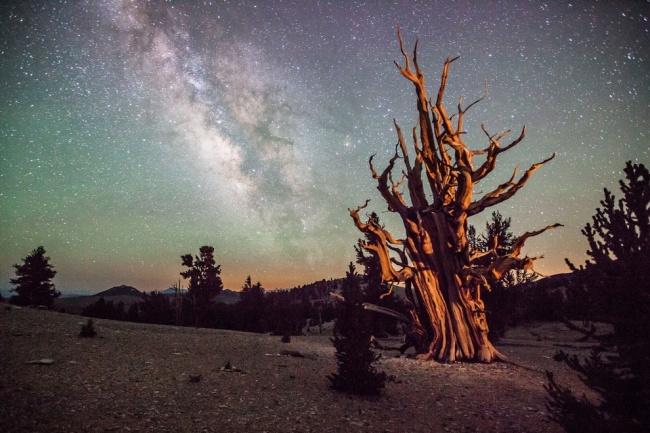 Рекомендация жюри: «Происхождение жизни на Земле». (Thomas Sullivan/Astronomy Photographer of the Year)