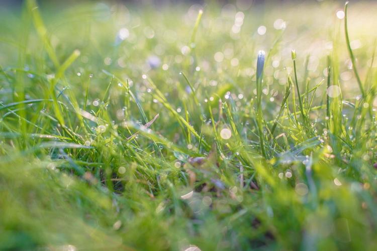 Утренняя роса в бельгийском городе Генте. Nikon D4