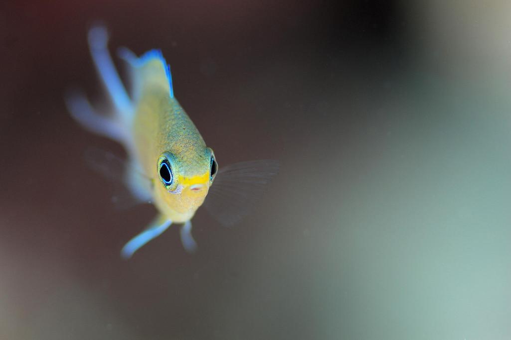 Фото: H-Shige. Неоновая рыбка