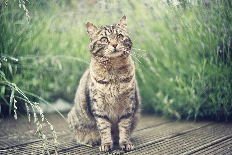 Фото на Гелиос, Fabien Petit. Кошка