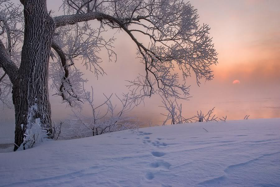 Пейзаж с заснеженными деревьями