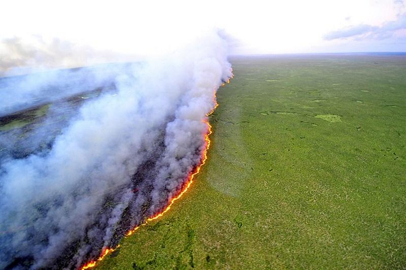 Полоса огня. Лесные пожары выжгли часть заповедника в Бразилии.