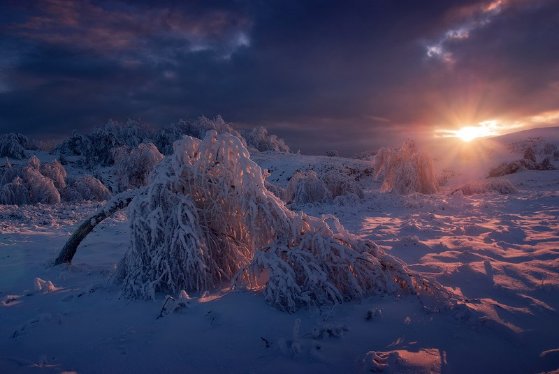 заснеженные деревья и закат