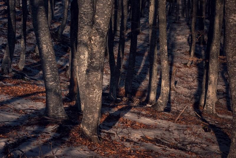 Южная Демерджи, лес