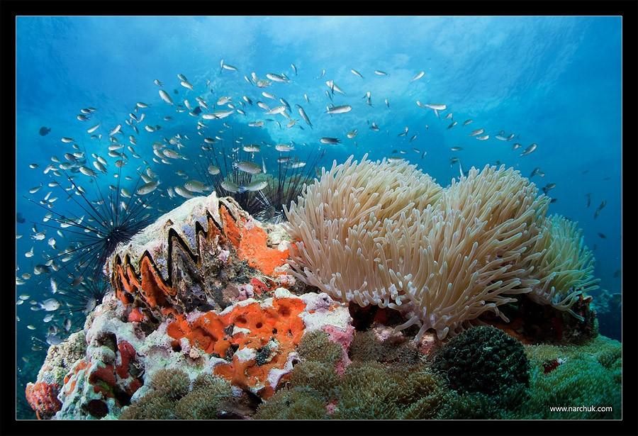 Подводный мир. Дайвинг. Снято на Canon 5D mk2 Canon 15 mm