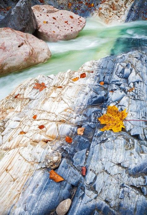 Осенние листья на камне
