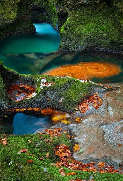 водоворот листьев