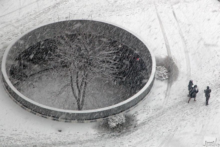 «Обошли природу». Дерево в бетонном плену. Дмитрий Челяпин, Москва