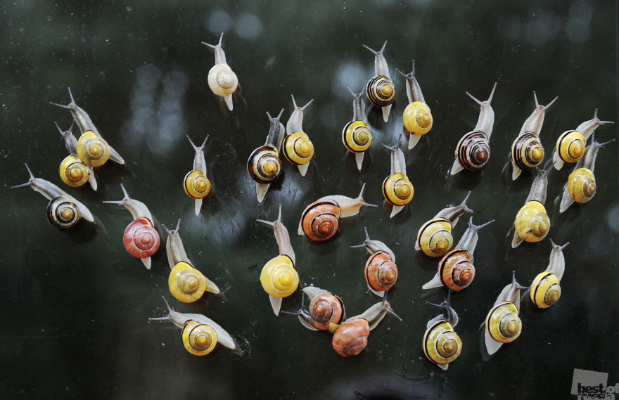 «На подиуме». Моллюски рода цепеи после дождя. Владимир Федоренко, город Светлогорск, Калининградская обл.