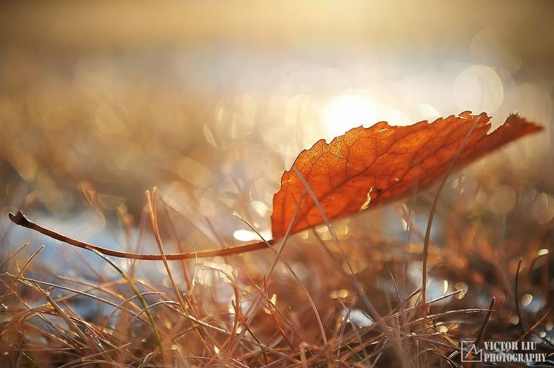 Листок в траве
