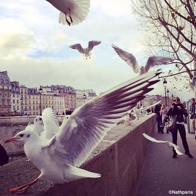 Чайки, Париж, инстаграм фото