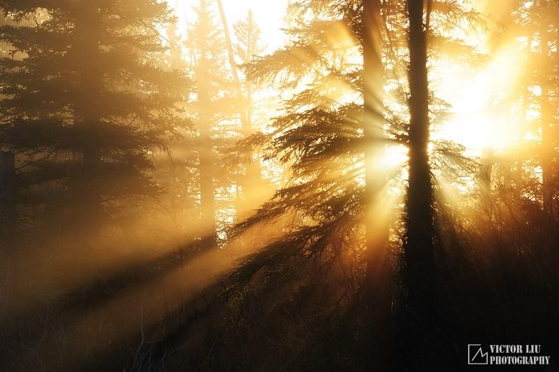 Солнечные лучи в туманном лесу