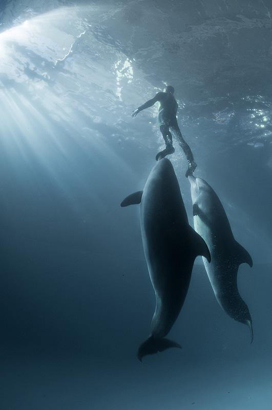 Дельфины. Фото Виктора Лягушкина