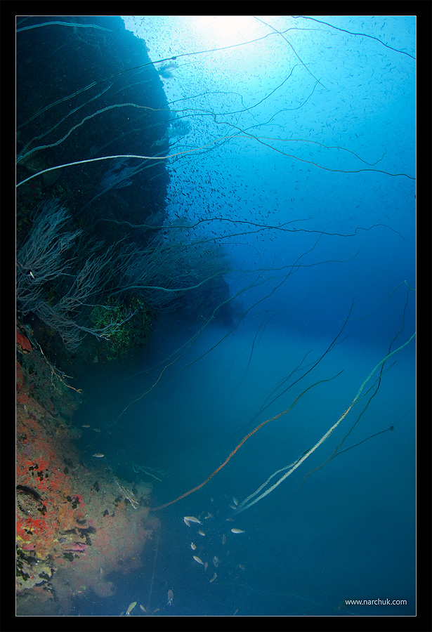 Риф Sail Rock. Дайвинг. Снято на Canon 5D mk2 Canon 15 mm
