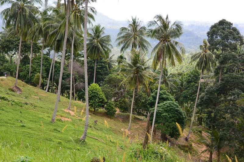 прошу фото пальмы