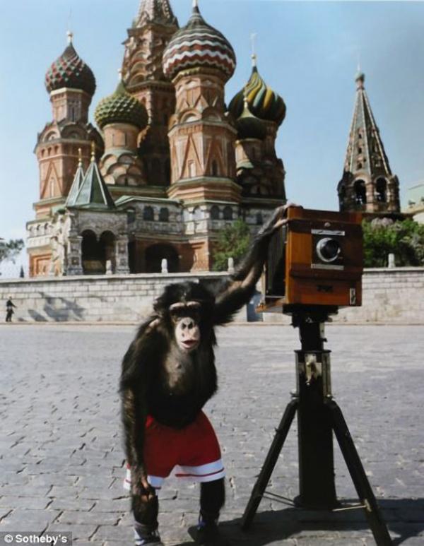 Микки – цирковой шимпанзе