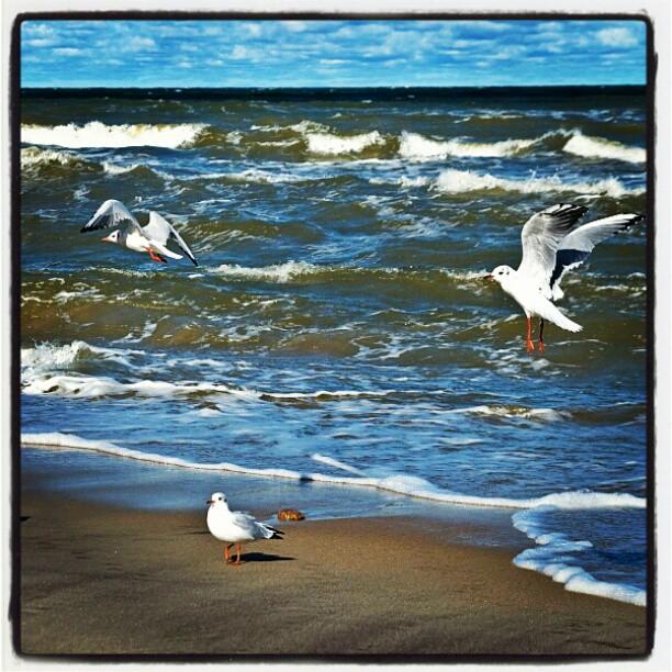 Чайки, море