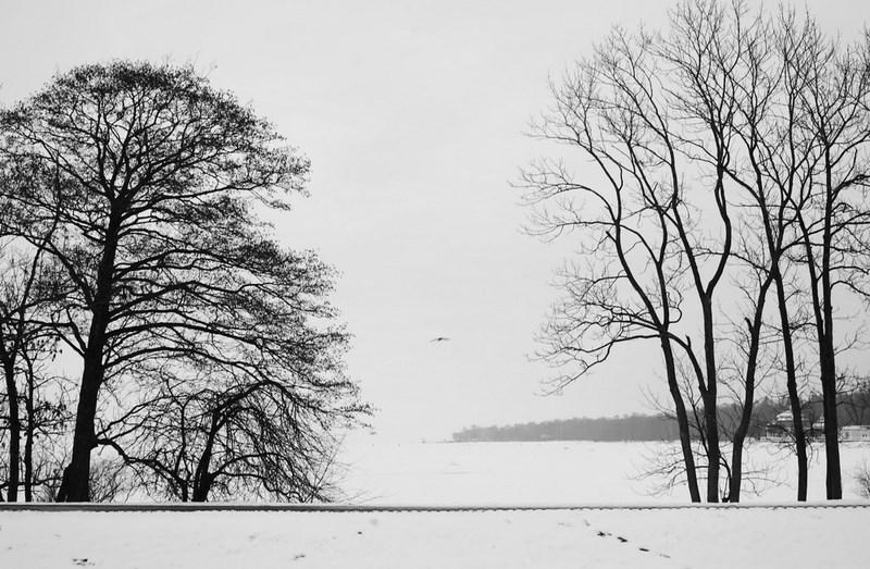 Петергоф, деревья.  Тестовые фото Sony 7