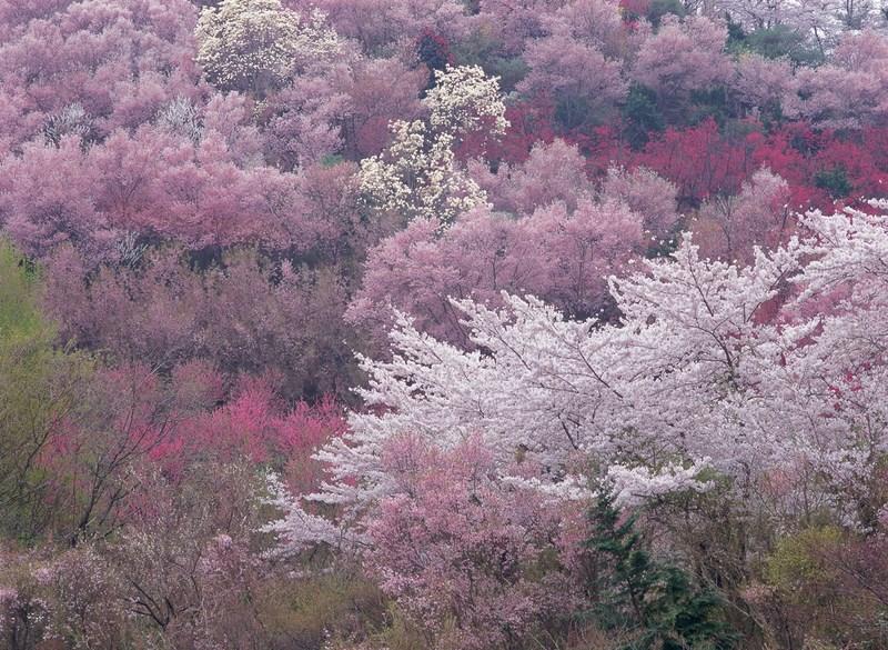 Фото: Masayuki Fukuoka