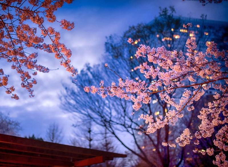 Фото: Yuga Kurita