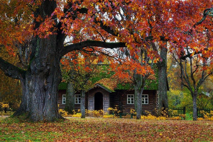 Осень в Михайловском
